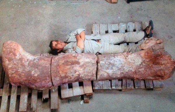 największy dinozaur na świecie - szczątki Argentyna