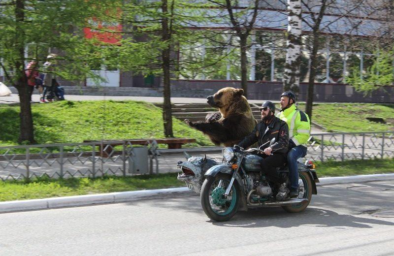 Niedźwiedź na motorze Rosja